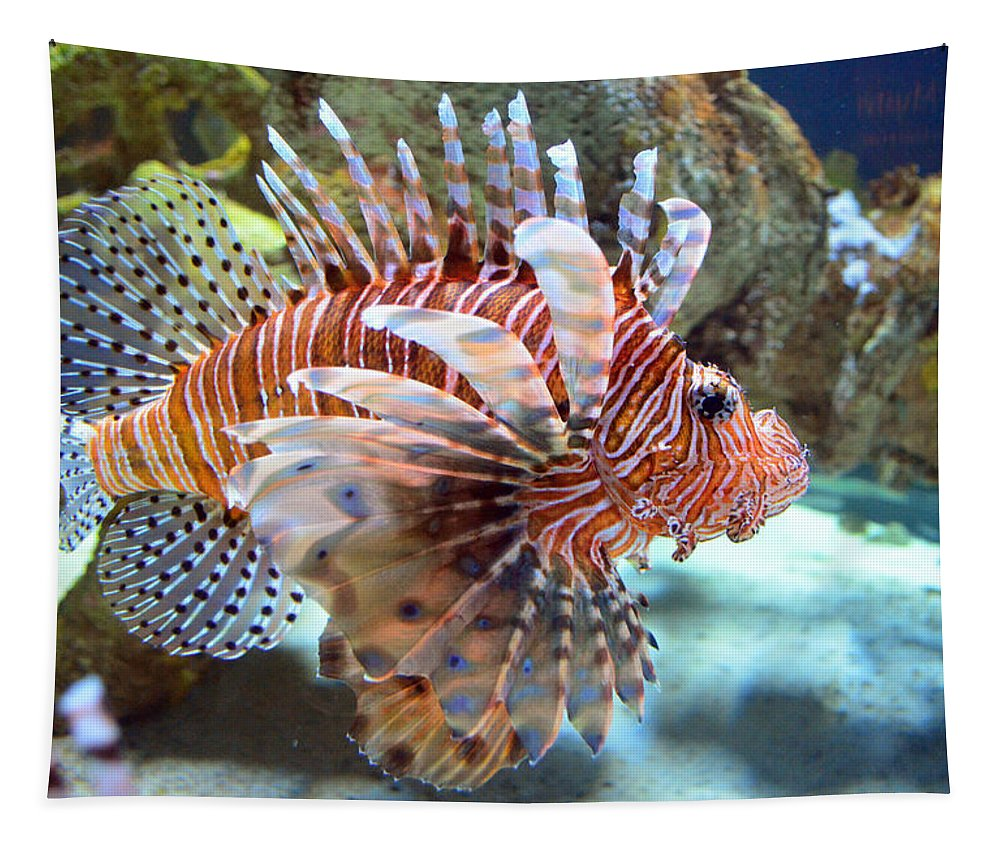Lionfish Tapestry featuring the photograph Lionfish by Sandi OReilly