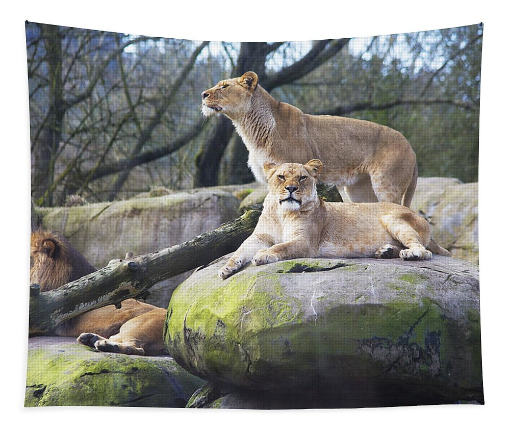 Lion Tapestry featuring the photograph Lions Posing by Belinda Greb