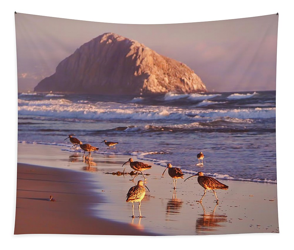 Beaches Tapestry featuring the photograph Long Billed Curlew - Morro Rock by Nikolyn McDonald