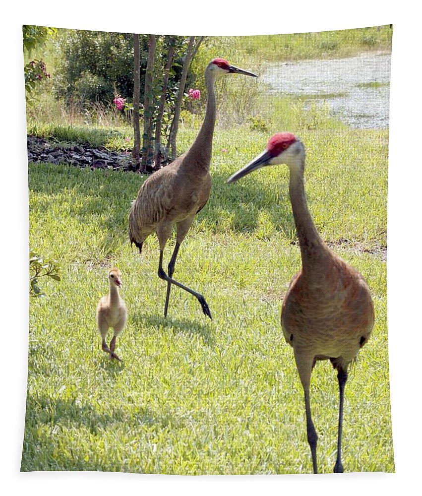 Sandhill Crane Tapestry featuring the photograph Looking For A Handout by Carol Groenen