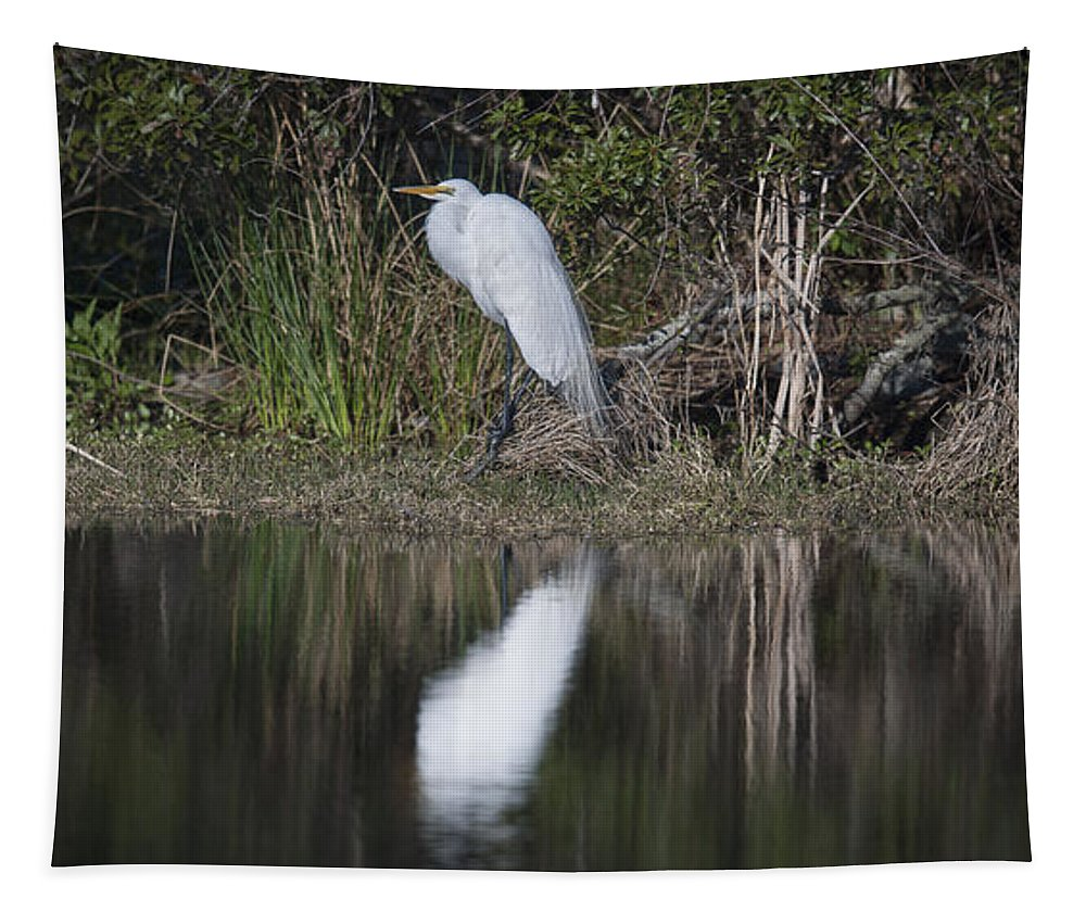 Great White Heron Tapestry featuring the photograph Looking For Lunch by Dale Powell