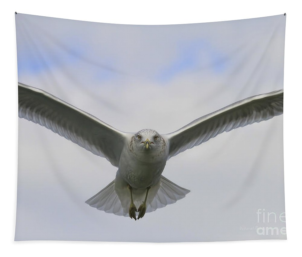 Seagull Tapestry featuring the photograph Looking You In The Eyes by Deborah Benoit