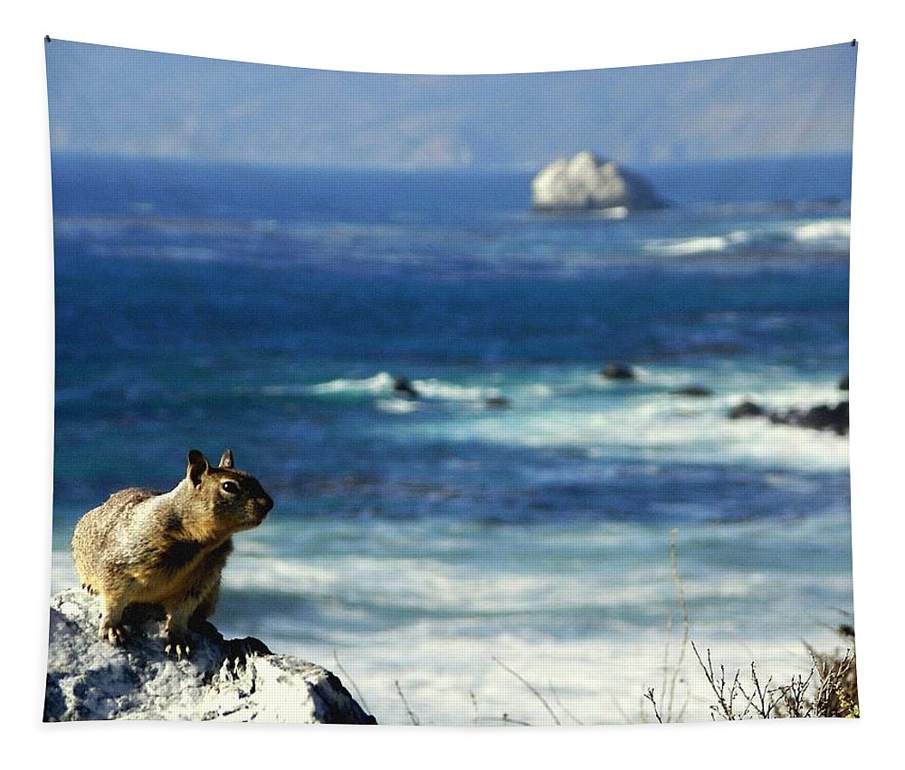 Squirrels Tapestry featuring the photograph Lost At Sea by Karen Wiles