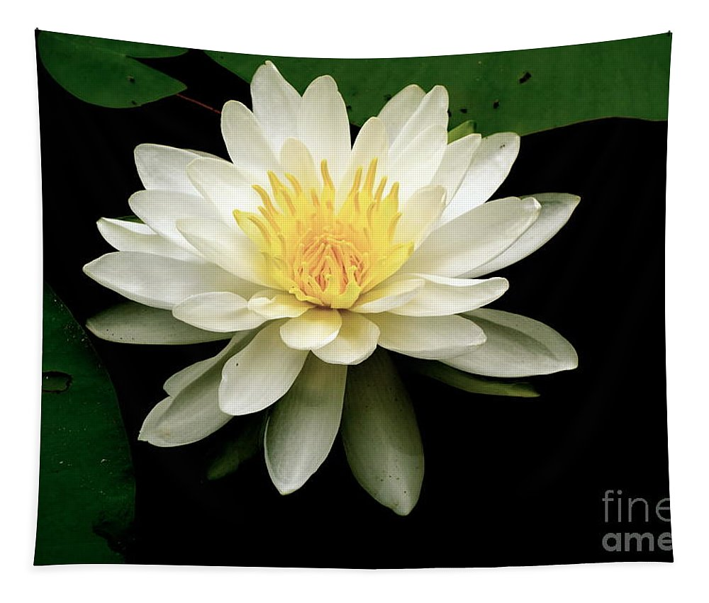 Lotus Tapestry featuring the photograph Lotus Flower by Jacqueline Athmann