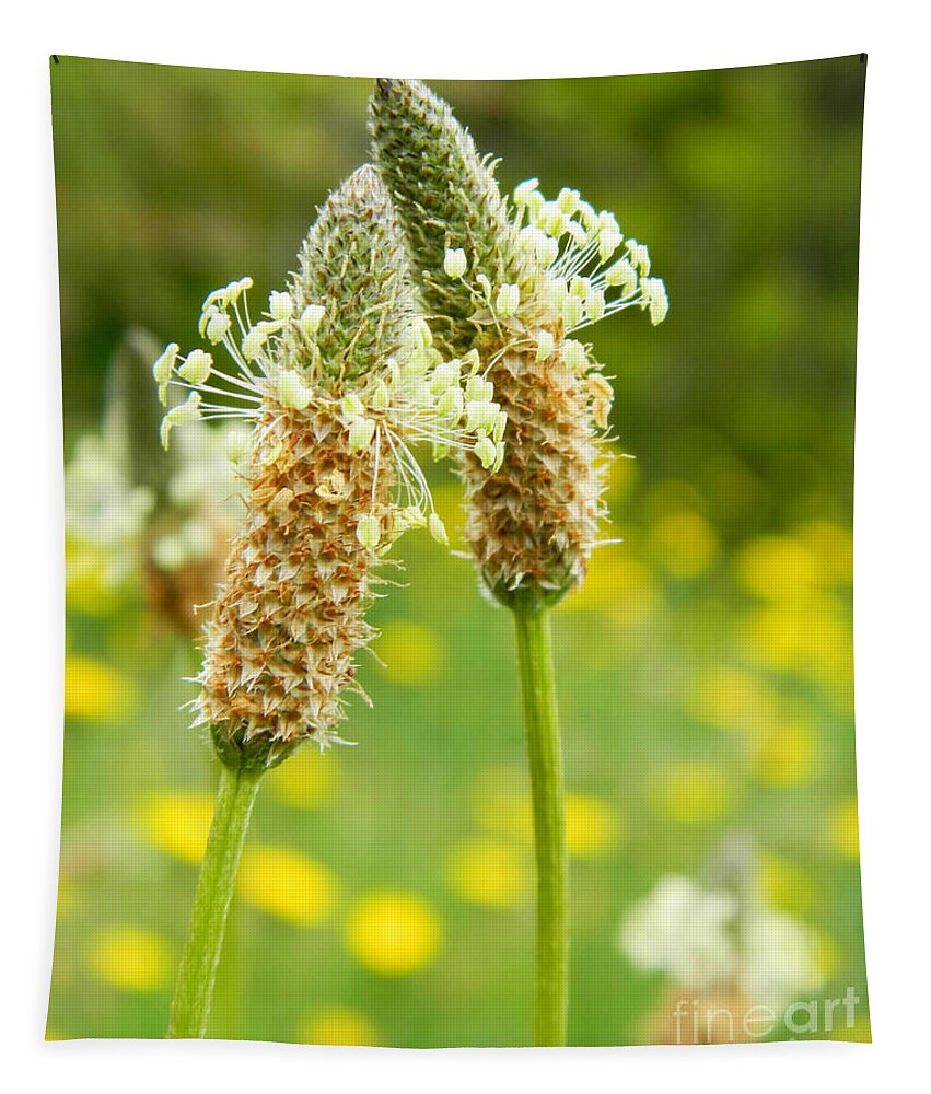 Field Tapestry featuring the photograph Love Is In The Air by Andrea Anderegg