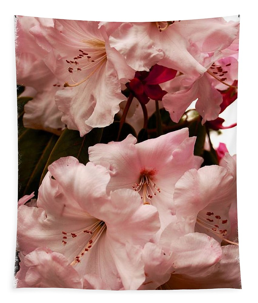 Flower Tapestry featuring the photograph Lovely Pink Rhododendrons With Border by Carol Groenen