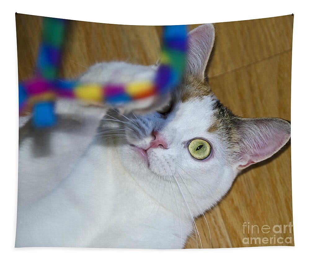 Festblues Tapestry featuring the photograph Loving The Rainbow Psychedelic Toy.. by Nina Stavlund