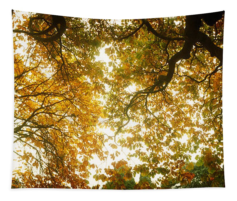 Photography Tapestry featuring the photograph Low Angle View Of Autumn Trees by Panoramic Images