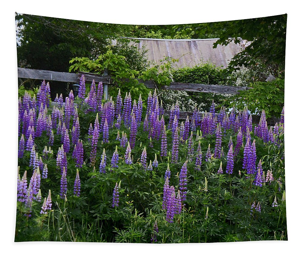 Lupine Tapestry featuring the photograph Lupine By The Fence by Nancy Griswold