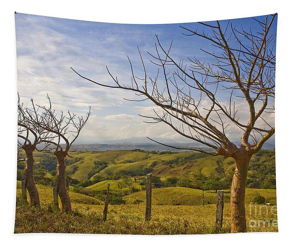 Landscape Tapestry featuring the photograph Lush Land Leafless Trees 2 by Madeline Ellis