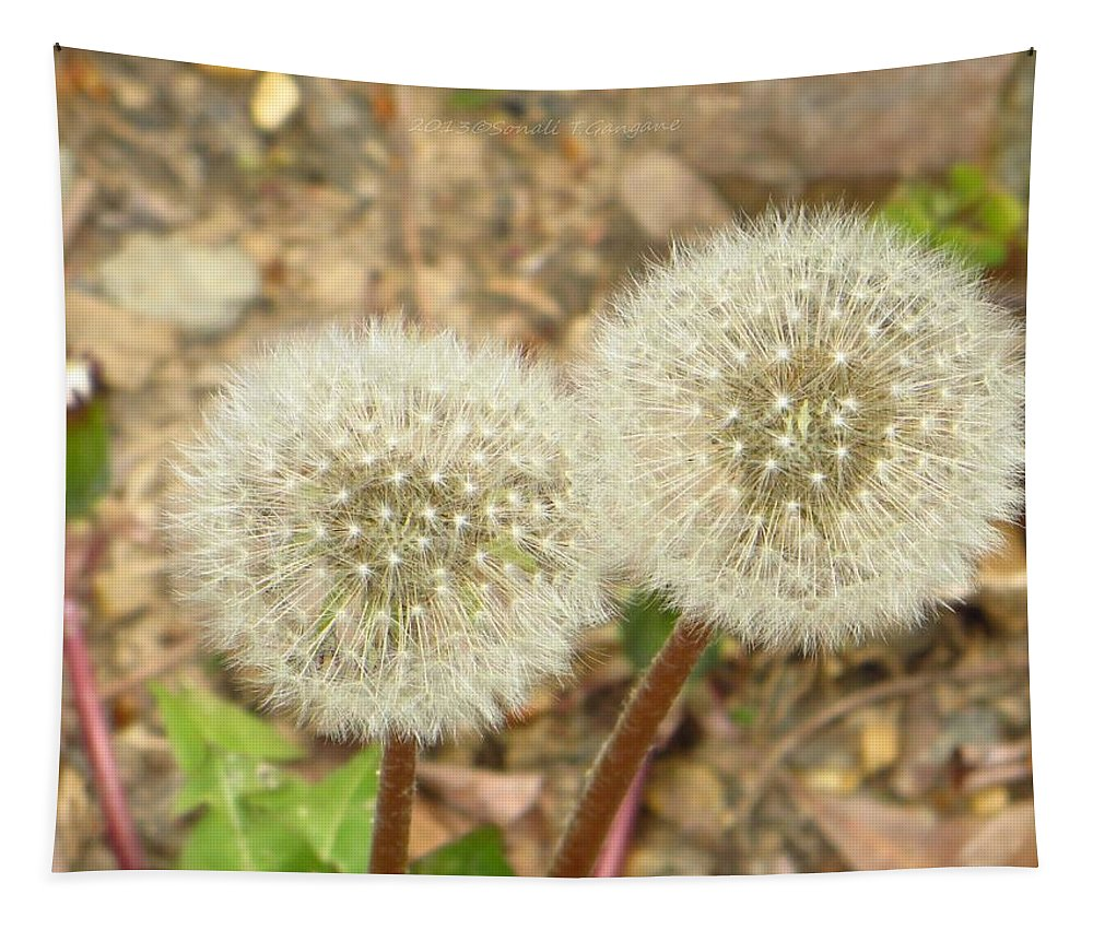Dandelions Tapestry featuring the photograph Magical Dandelion by Sonali Gangane