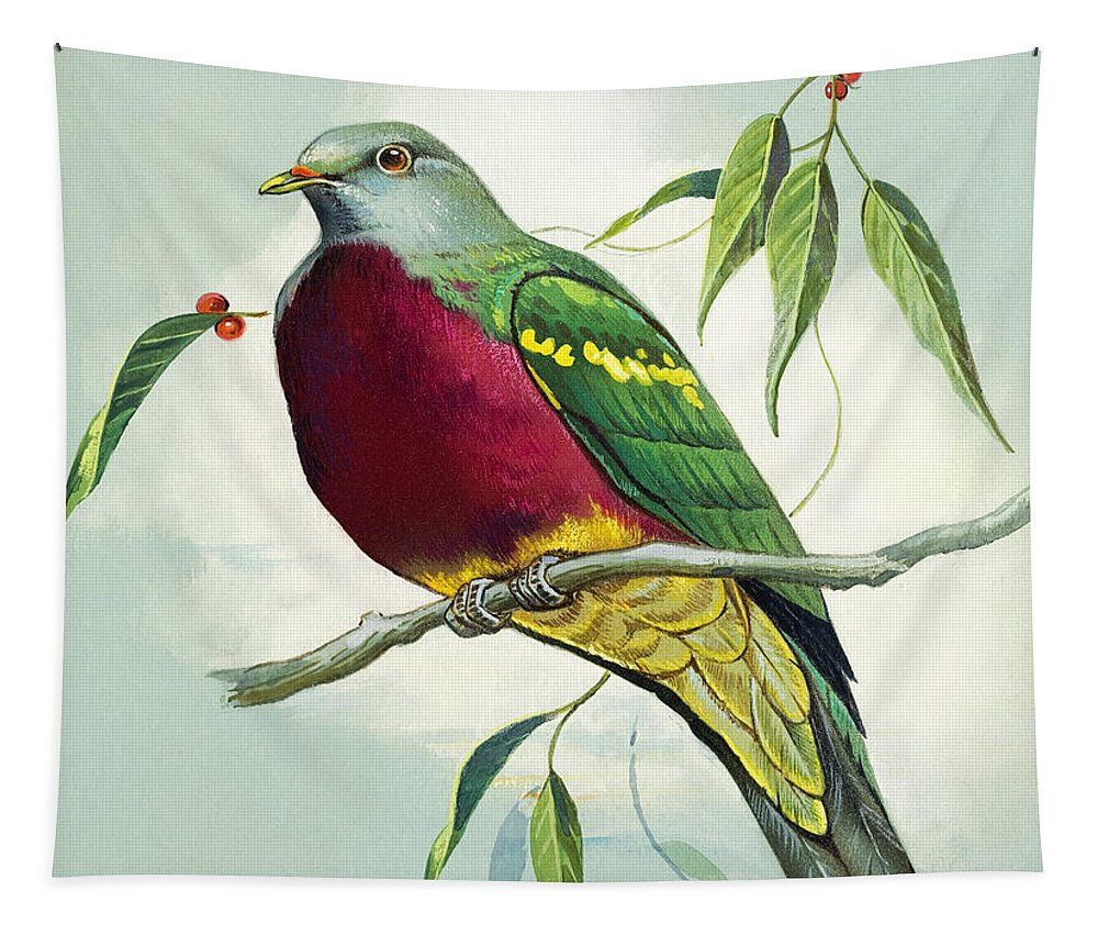 Bird Tapestry featuring the painting Magnificent Fruit Pigeon by Bert Illoss
