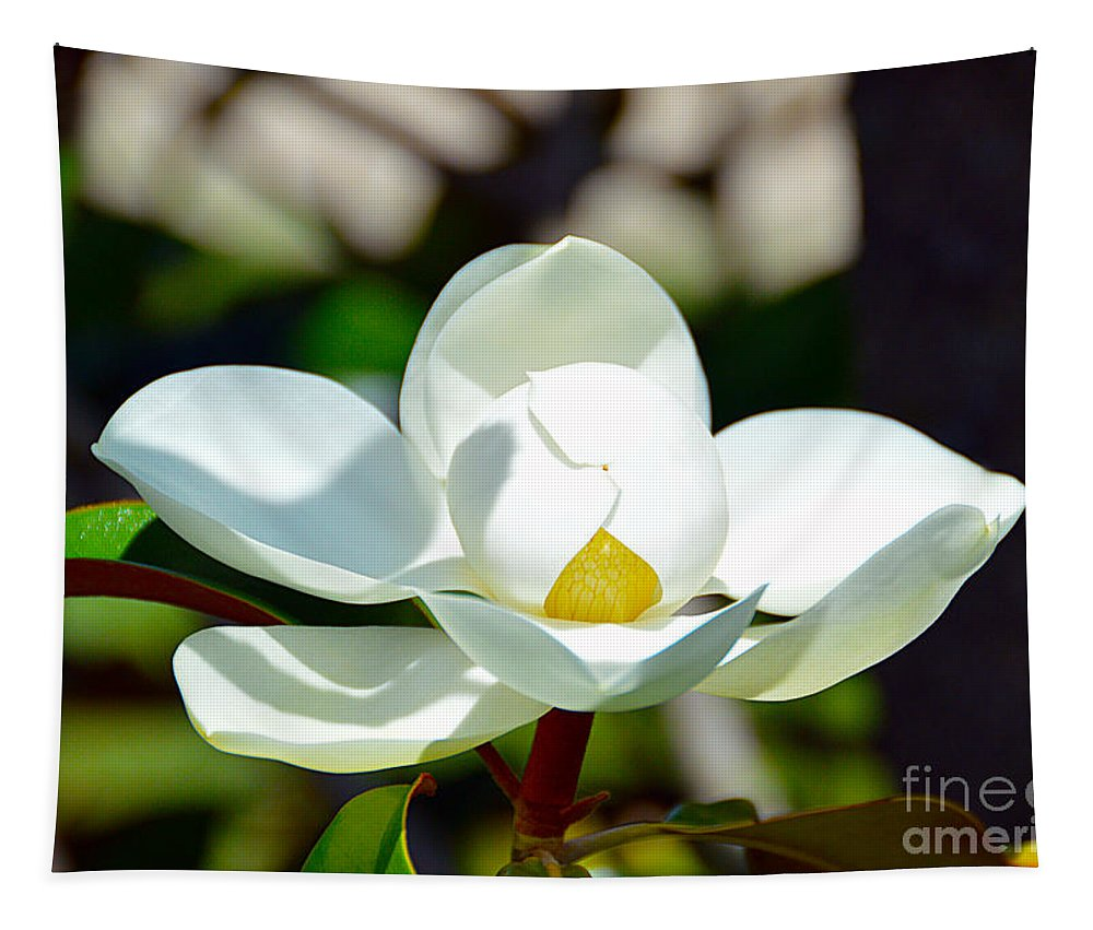 Magnolia Tapestry featuring the photograph Magnolia Grandiflora by Catherine Sherman