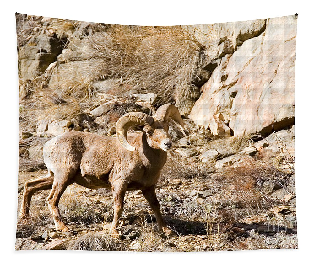 Bighorn Sheep Tapestry featuring the photograph Majestic Bighorn by Steve Krull