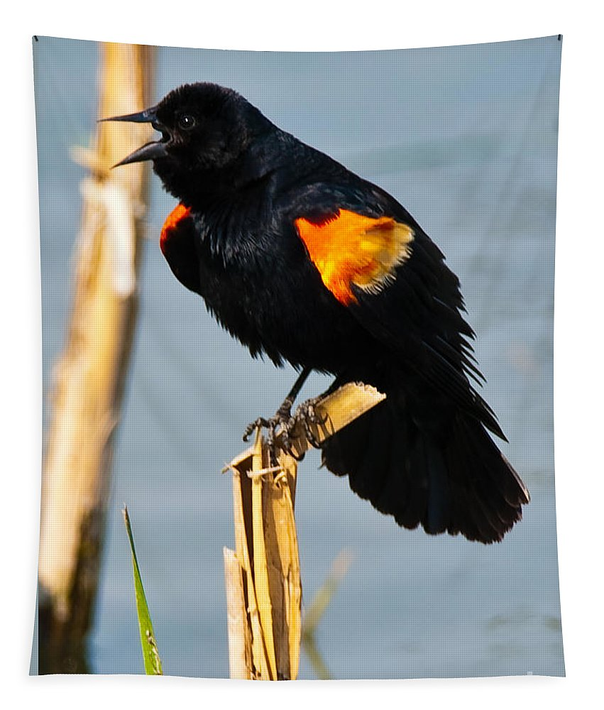 Orleans Tapestry featuring the photograph Male Red-winged Blackbird by Robert McAlpine