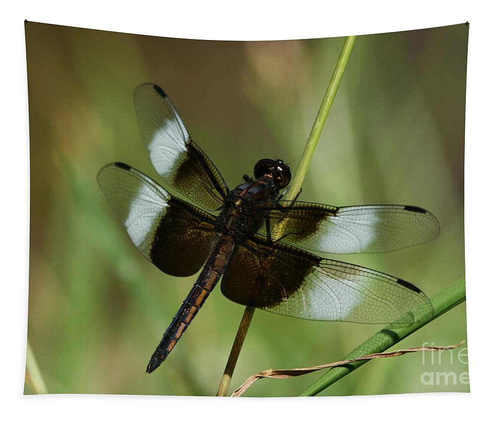 Dragonfly Tapestry featuring the photograph Male Widow Skimmer Dragonfly by Judy Whitton