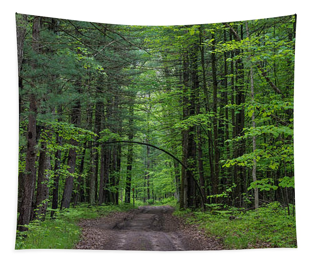 Tree Tapestry featuring the photograph Manistee National Forest Michigan by Steve Gadomski