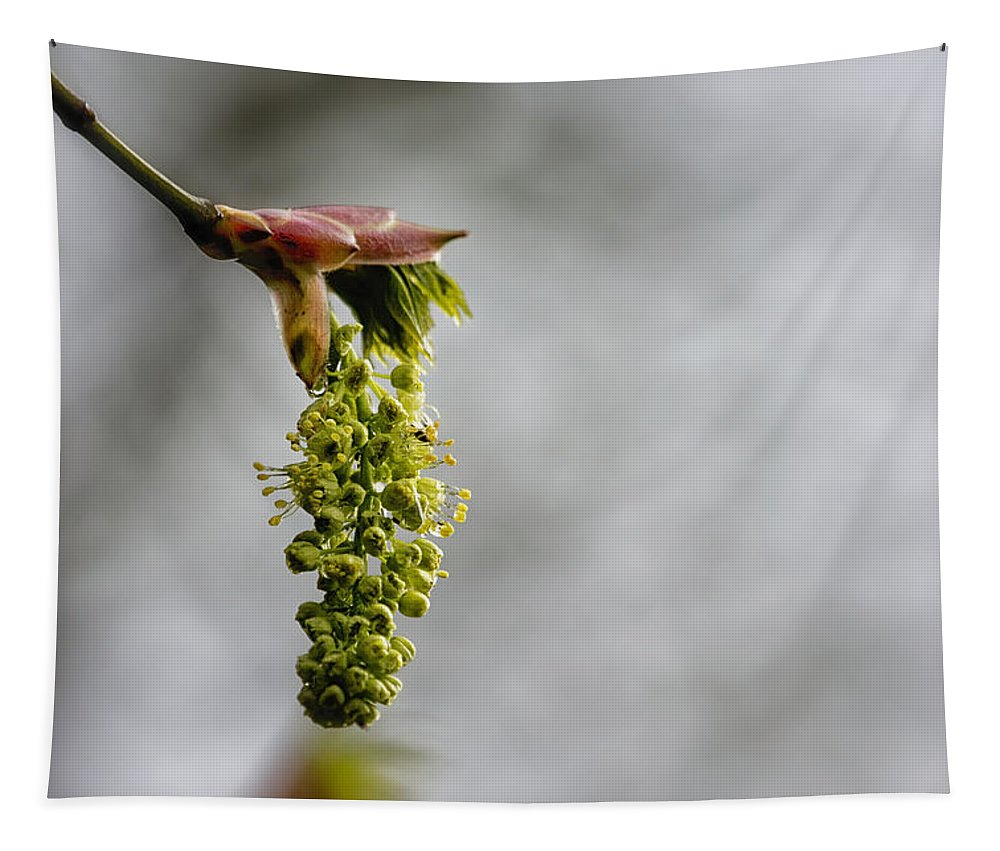 Maple Blossom Tapestry featuring the photograph Maple Blossom - No. 2 by Belinda Greb