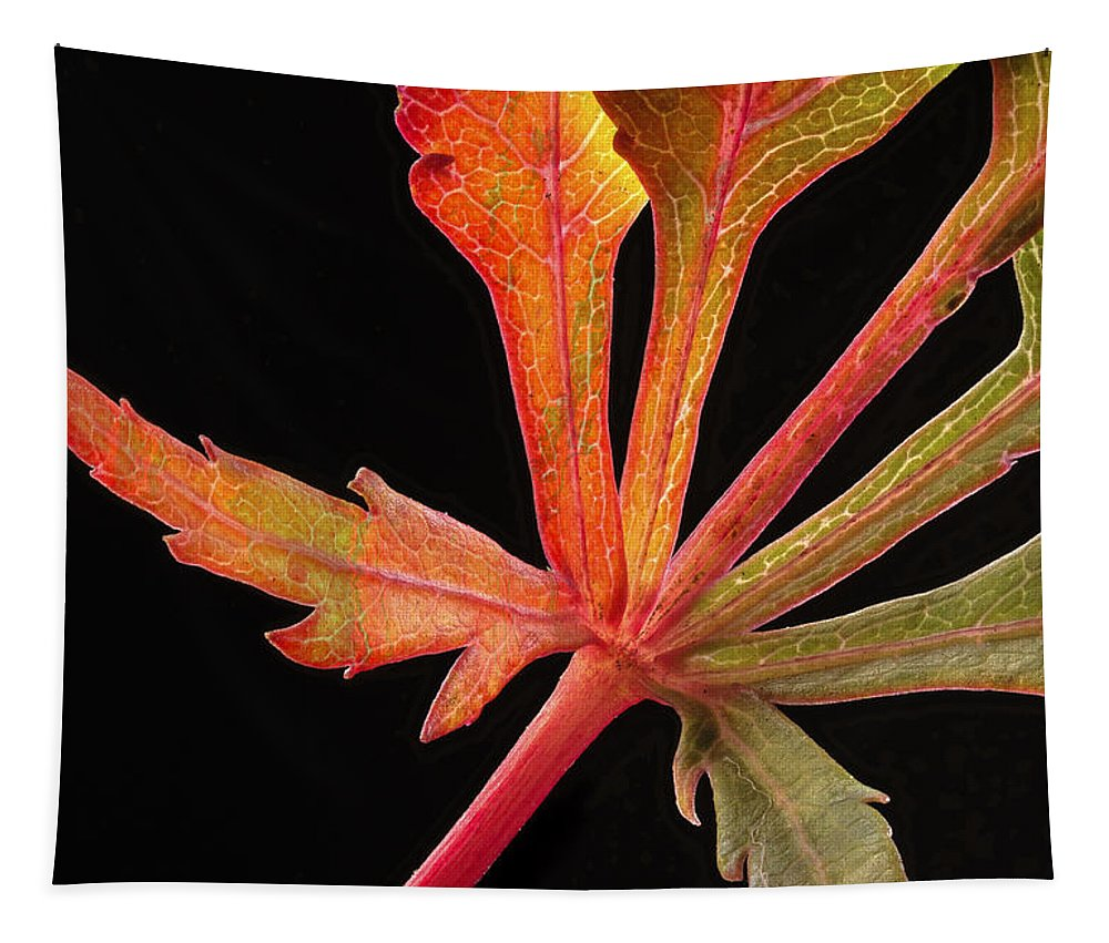 Leaf Tapestry featuring the photograph Maple Leaf Detail by Jean Noren