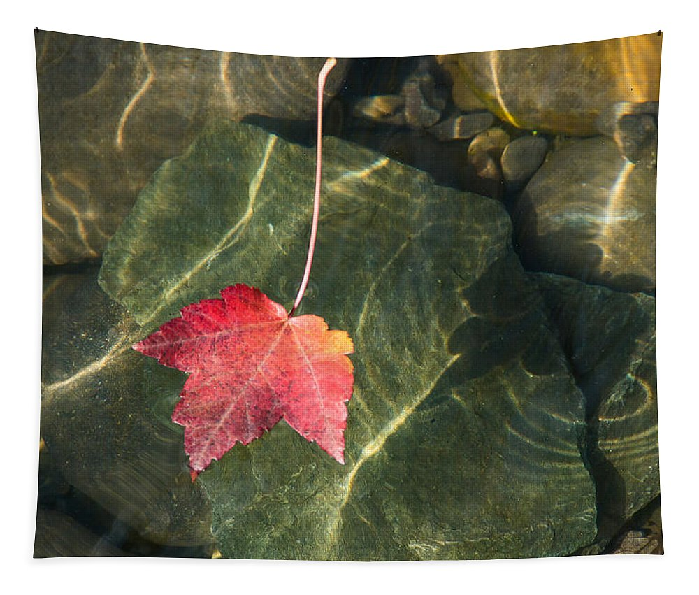 Maple Tapestry featuring the photograph Maple Leaf On Water by Mick Anderson