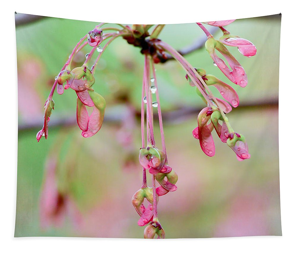 Seed Pods Tapestry featuring the photograph Maple Leaf Seed Pods  by Kerri Farley