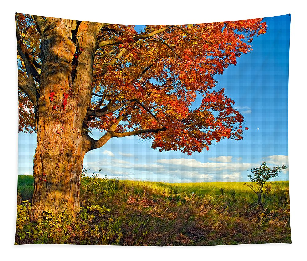 Maples Tapestry featuring the photograph Maple Moon 2 by Steve Harrington