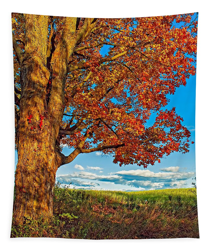 Maples Tapestry featuring the photograph Maple Moon by Steve Harrington