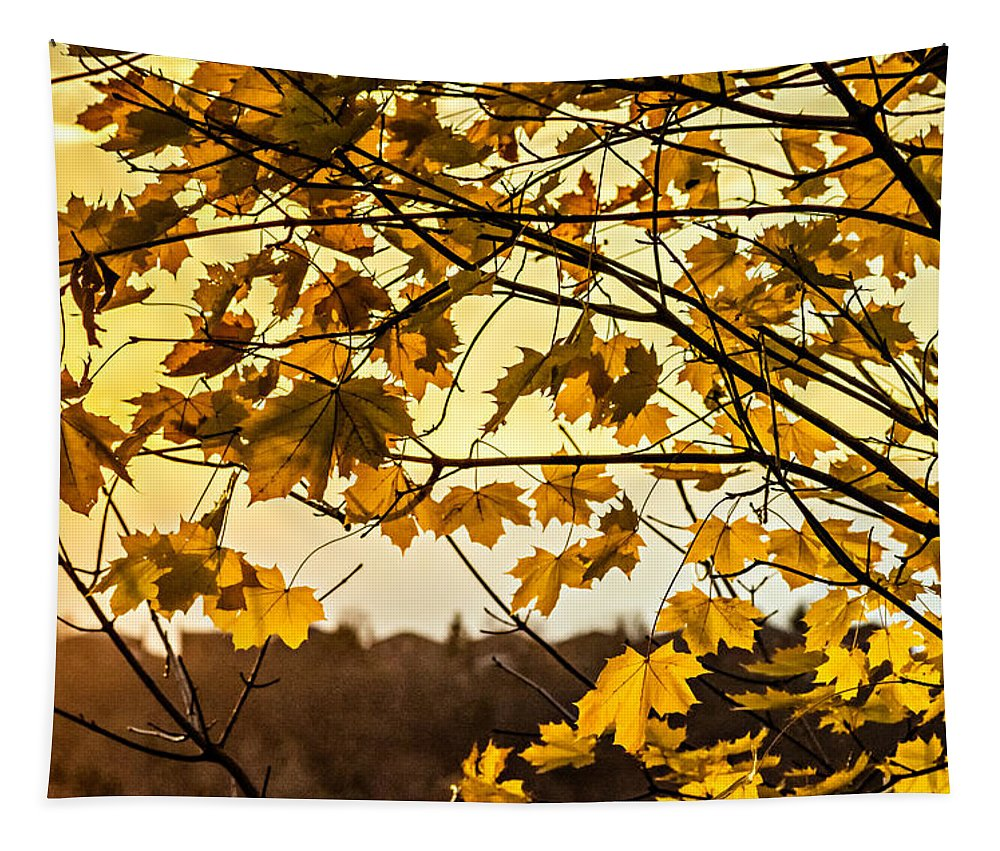 Landscape Tapestry featuring the photograph Maple Sunset by Steve Harrington
