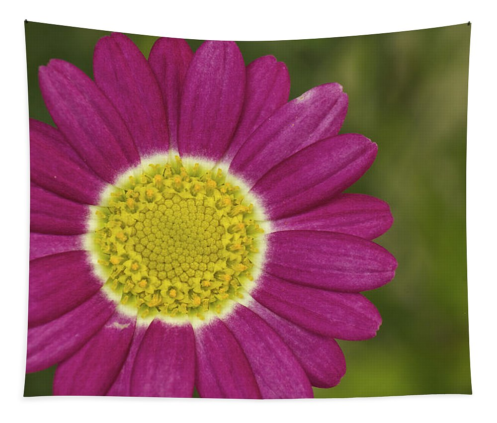 Marguerite Daisy Tapestry featuring the photograph Marguerite by Penny Meyers