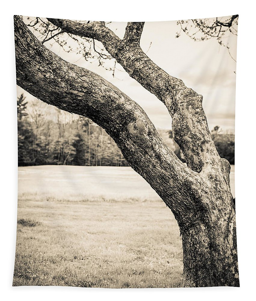 Cornish Tapestry featuring the photograph Meet Me Under The Old Apple Tree by Edward Fielding