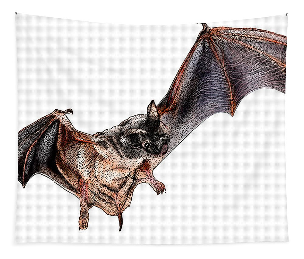 Illustration Tapestry featuring the photograph Mexican Free-tailed Bat by Roger Hall