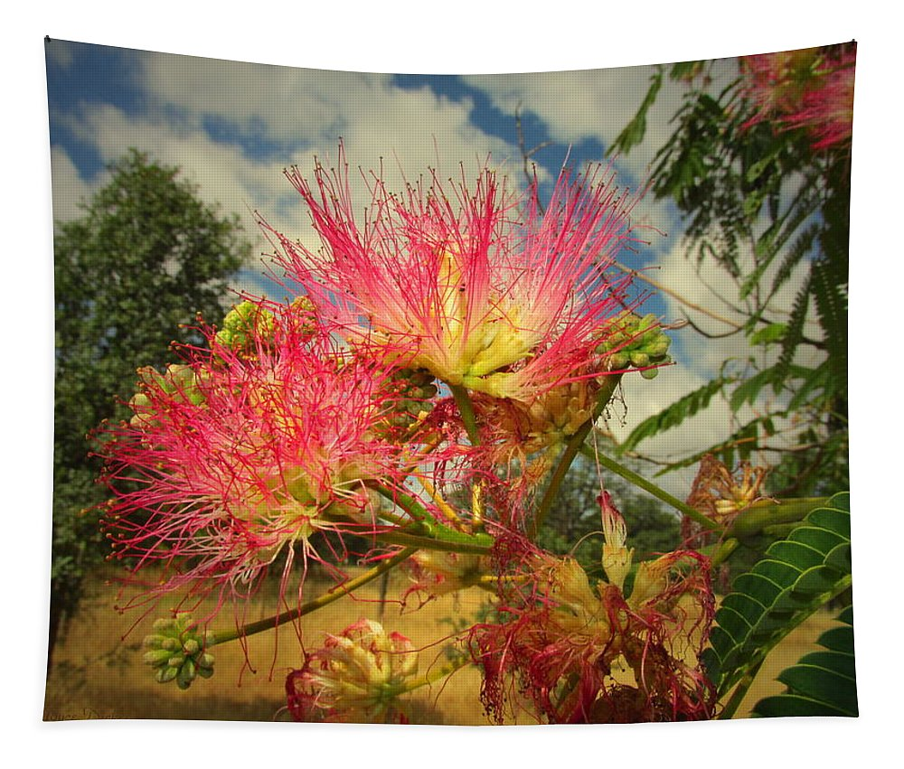 Mimosa Tapestry featuring the photograph Mimosa Blossoms by Joyce Dickens