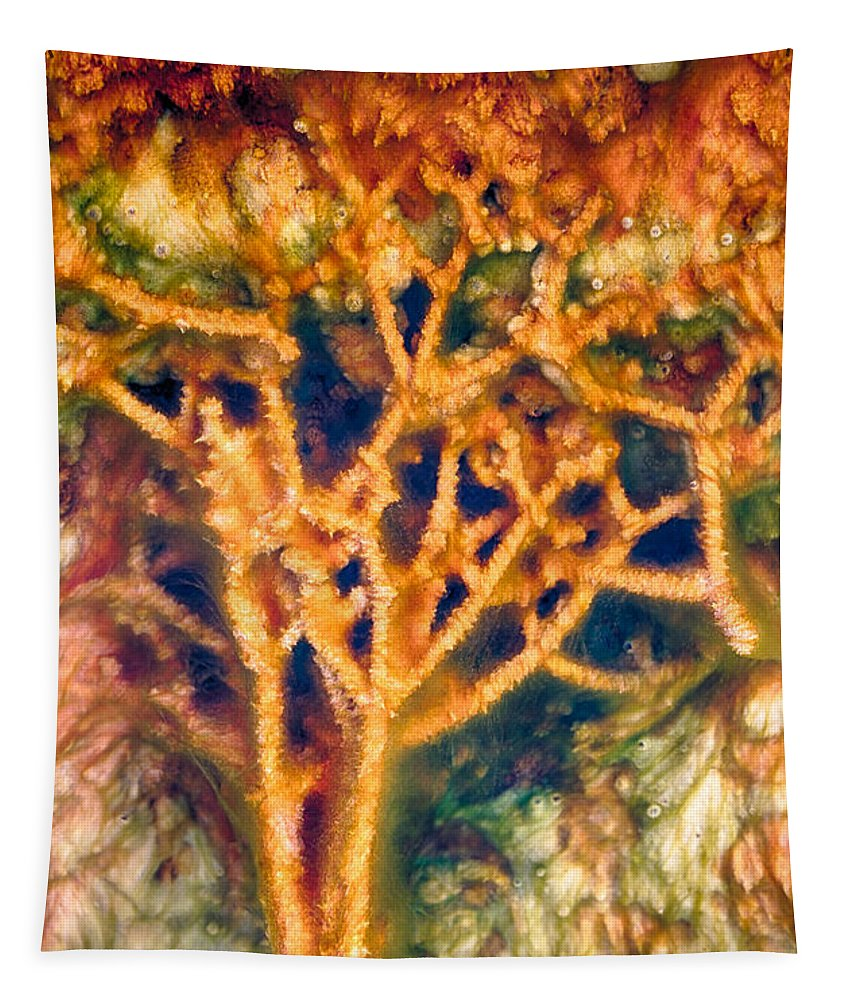 Hot Springs Tapestry featuring the photograph Mineral Branches Hot Springs by Scott Campbell
