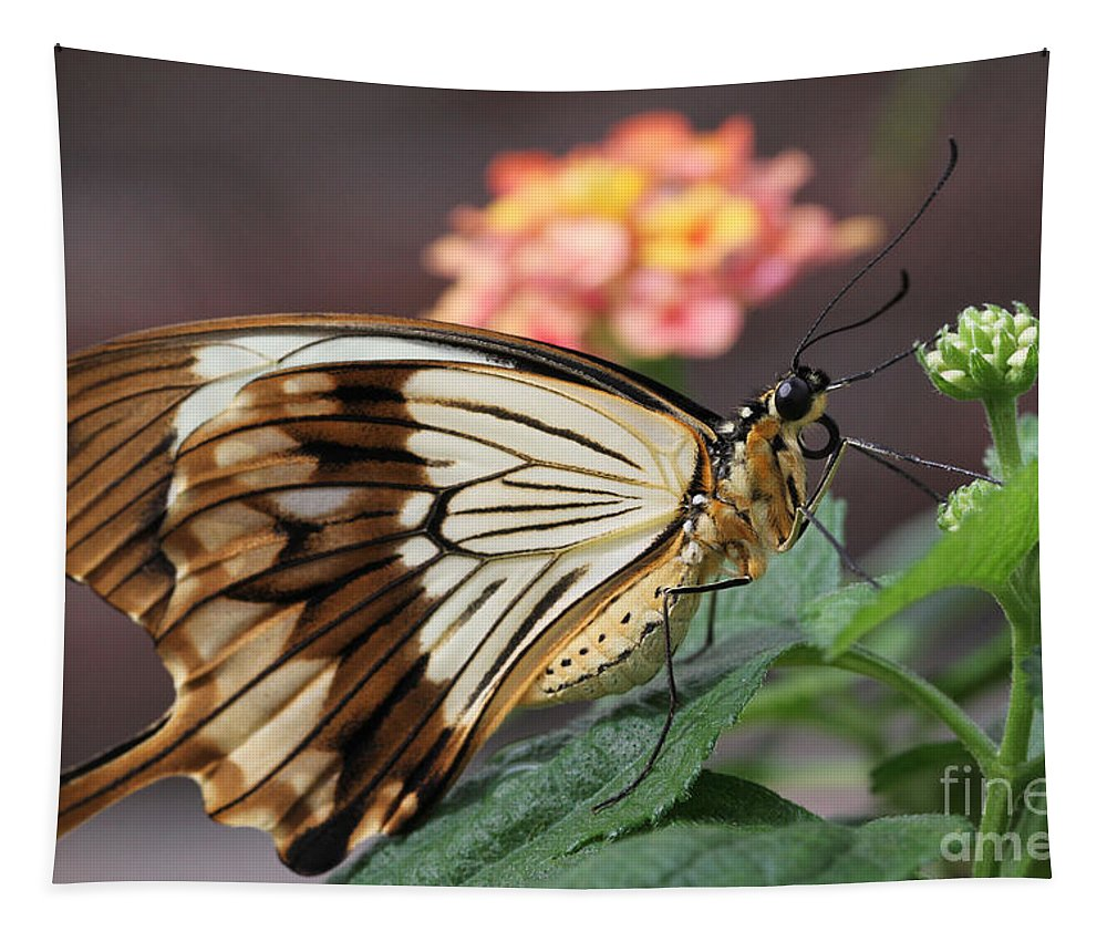 Butterfly Tapestry featuring the photograph Mocker Swallowtail Butterfly by Judy Whitton