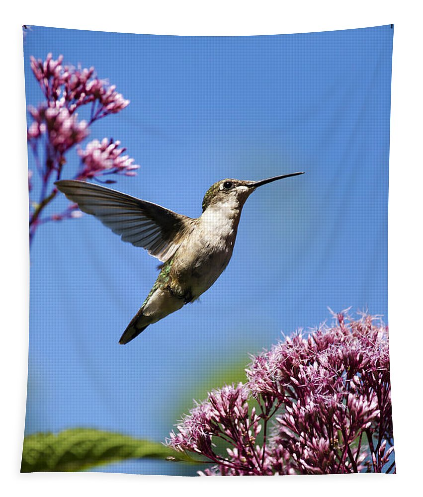 Hummingbird Tapestry featuring the photograph Modern Beauty by Christina Rollo