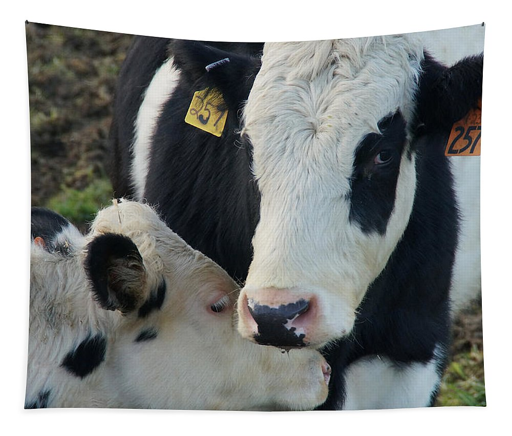 Cow Tapestry featuring the photograph Mom 257 And Kid by Mick Anderson