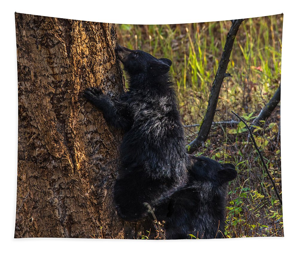 Triplets Tapestry featuring the photograph Mom Said Up The Tree by Yeates Photography