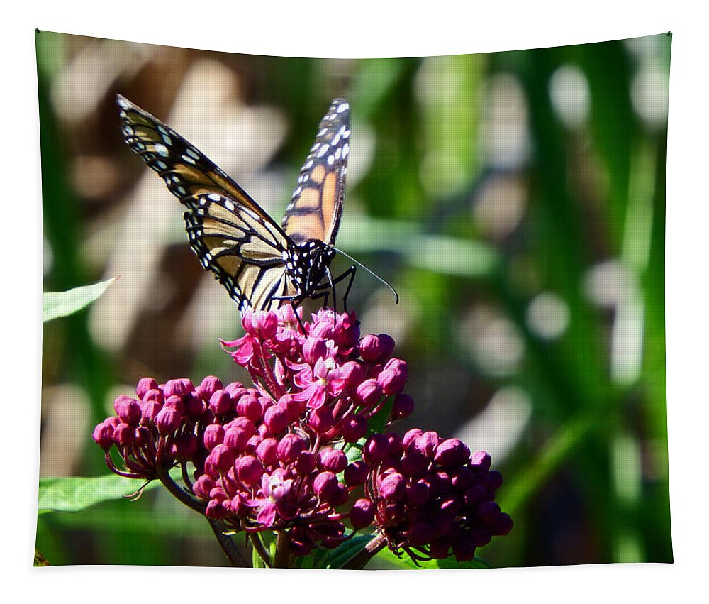 Monarch Tapestry featuring the photograph Monarch Butterfly by Alison Gimpel