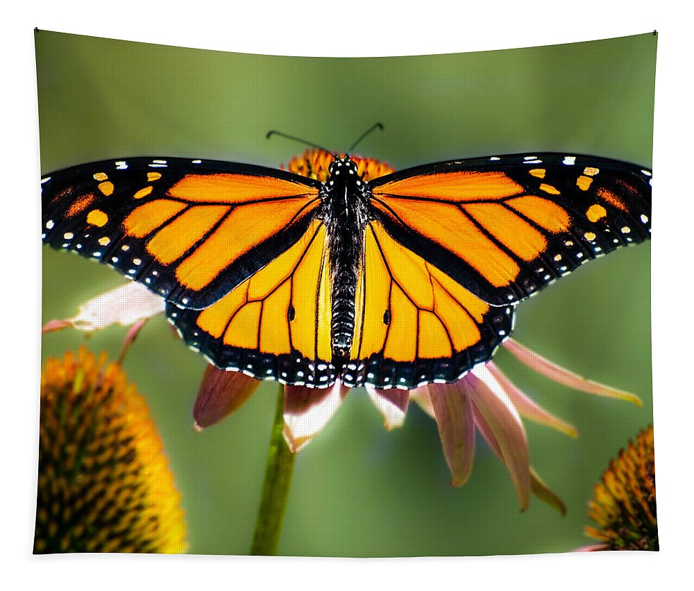 Monarch Butterfly Tapestry featuring the photograph Monarch Butterfly by Bob Orsillo