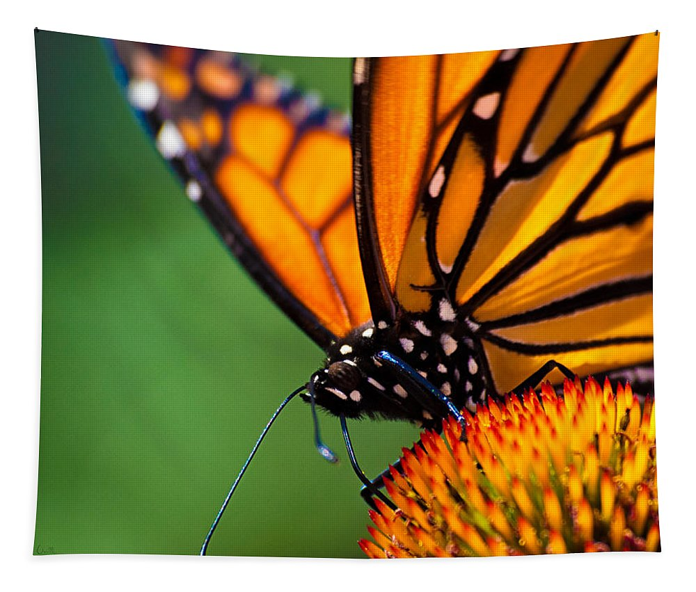 Monarch Tapestry featuring the photograph Monarch Butterfly Headshot by Bob Orsillo