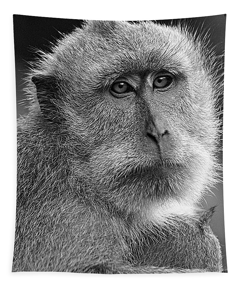 Animals Tapestry featuring the photograph Monkey's Eyes by Ben Yassa