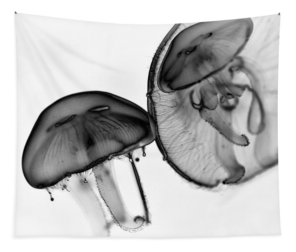 Moon Jelly Tapestry featuring the photograph Moon Jellyfish - Black And White by Marianna Mills