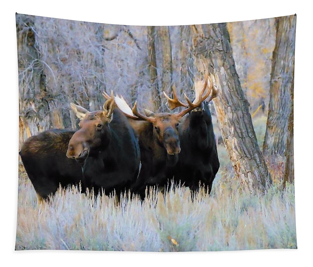 Moose Tapestry featuring the photograph Moose Meeting by Jeff Swan