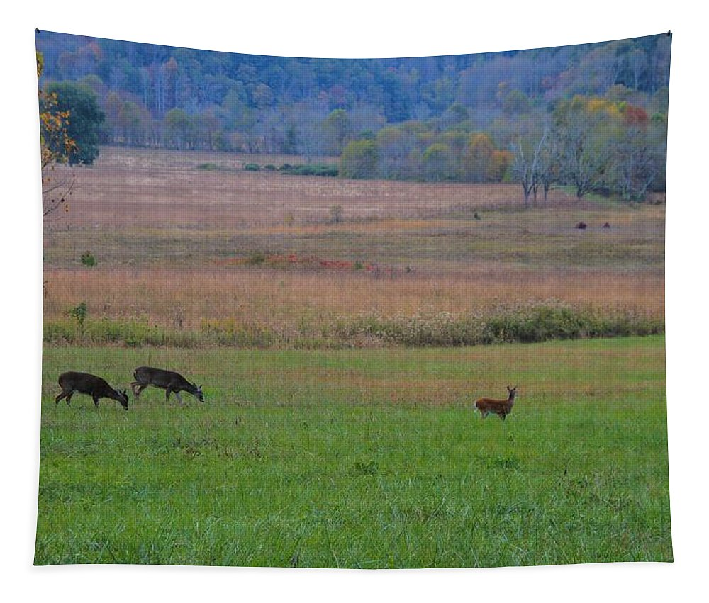 Morning Deer In Cades Cove Tapestry featuring the photograph Morning Deer In Cades Cove by Dan Sproul