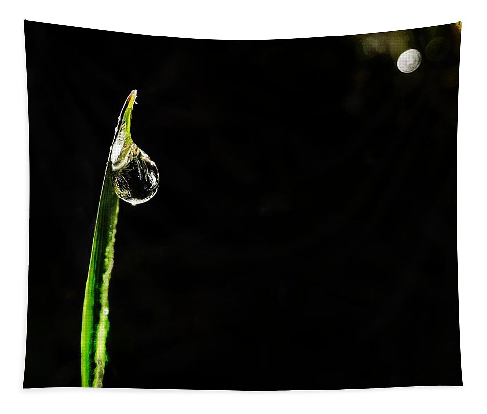 Morning Tapestry featuring the photograph Morning Dew by Marianna Mills