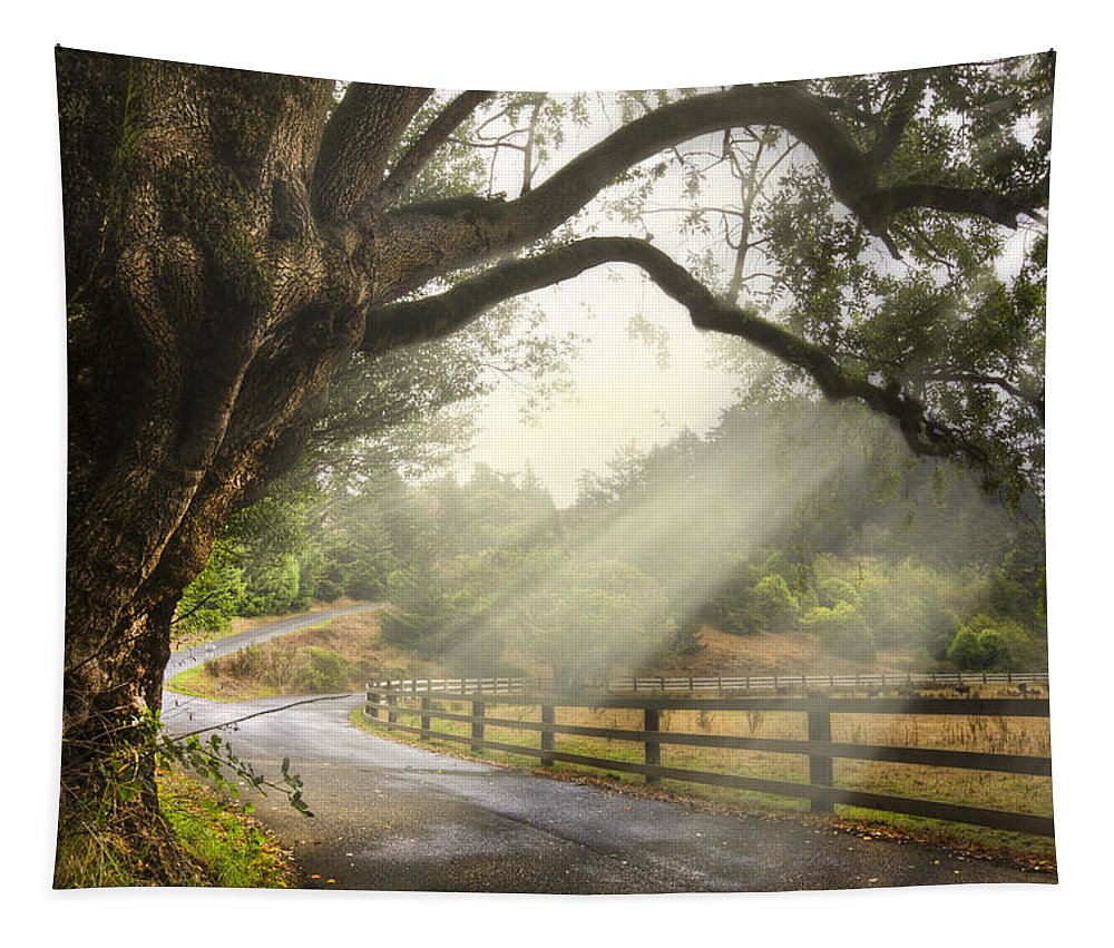 Clouds Tapestry featuring the photograph Morning Light by Debra and Dave Vanderlaan
