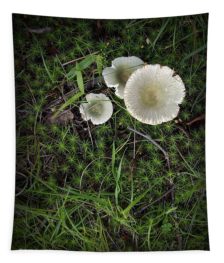 2d Tapestry featuring the photograph Moss And Fungi by Brian Wallace