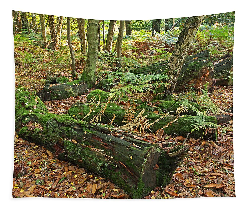 Fall Tapestry featuring the photograph Moss Covered Logs On The Forest Floor by Gill Billington