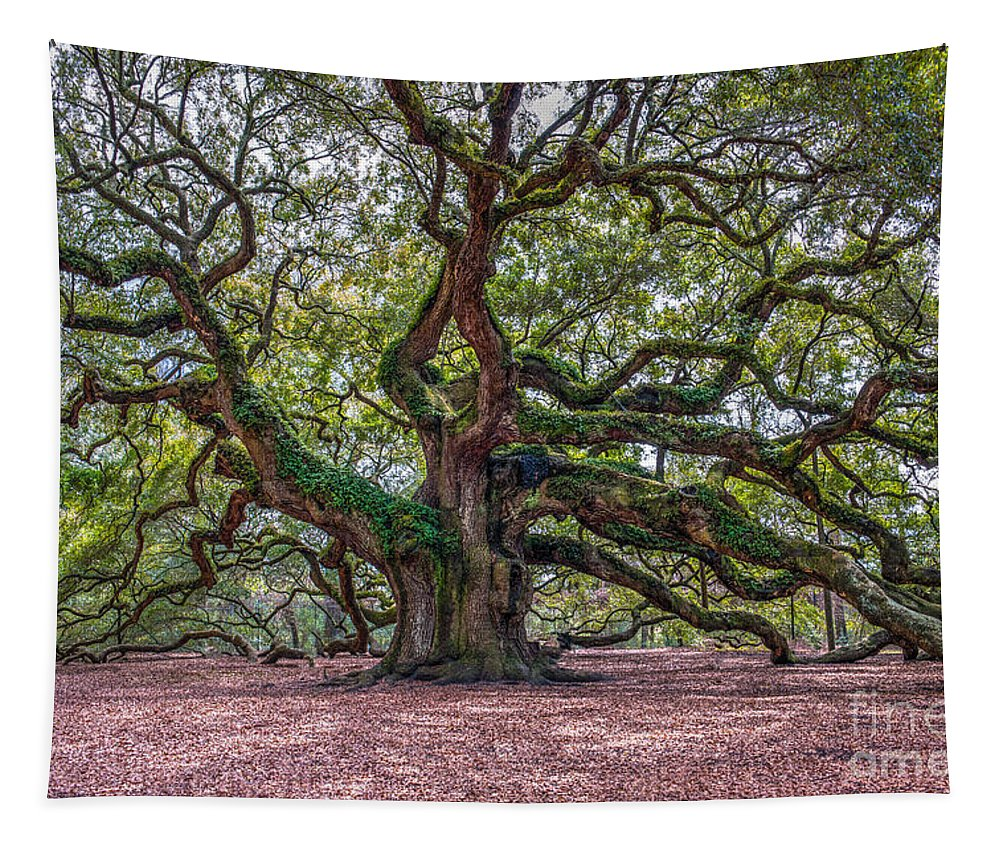 Angel Oak Tree Tapestry featuring the photograph Moss Draped Limbs by Dale Powell