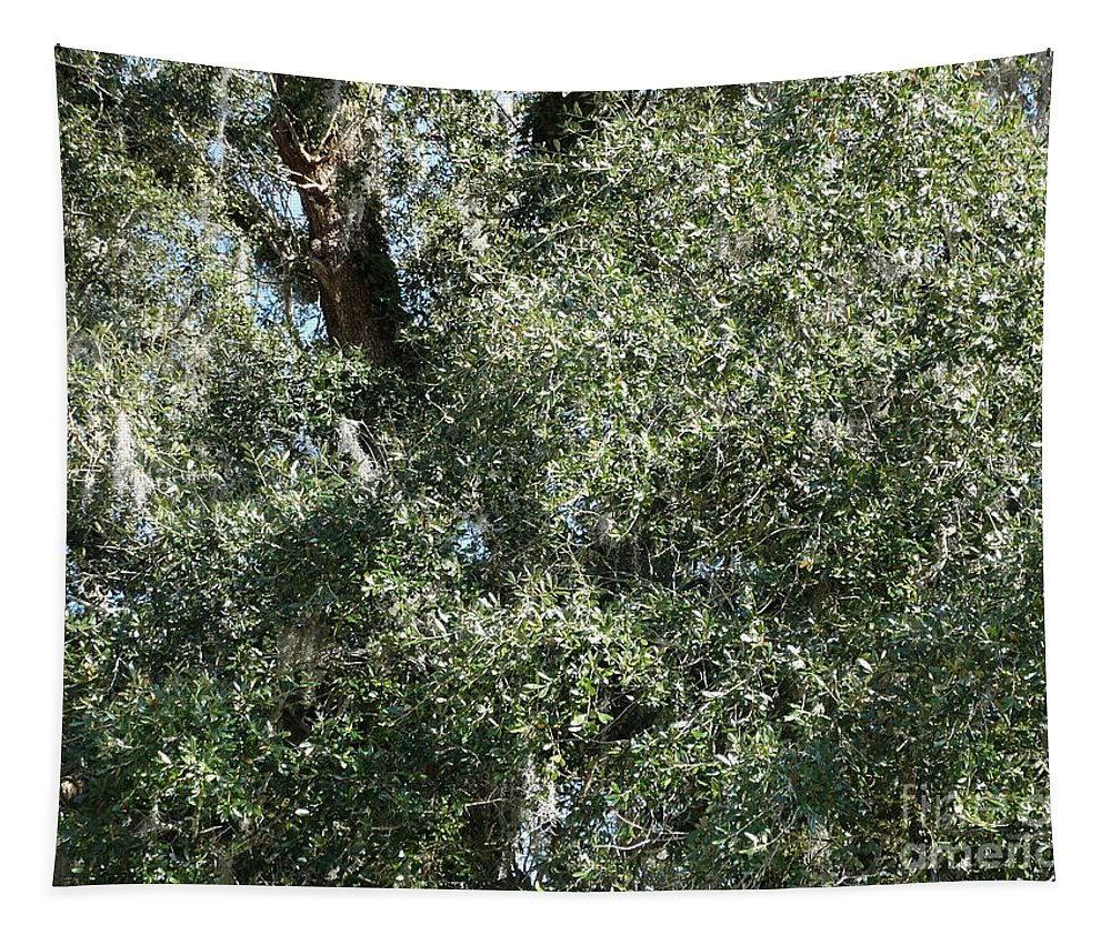 Forest Tapestry featuring the photograph Mossy Oak by Joseph Baril